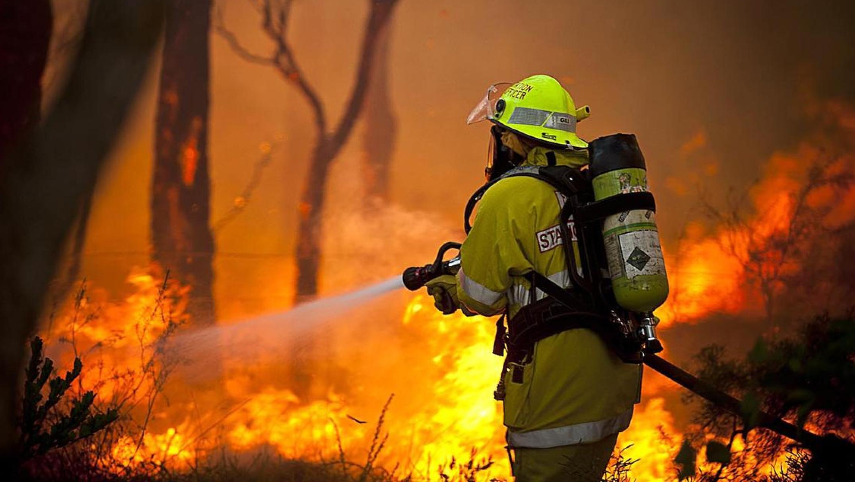 фотографии пожарных на пожарах моника собака обезьянка